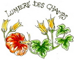 Lumire des Champs
